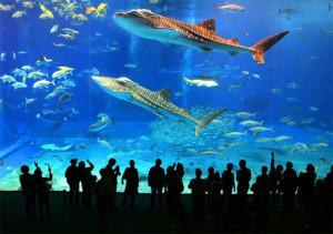 montagem do aquario de santos foto mais santos